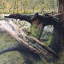 Omgevallen boom, doek 60x80 acryl