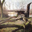 Oude wilg met mos, doek 140x200 acryl